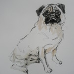 Percy, Pug, Ink on Watercolour Painting